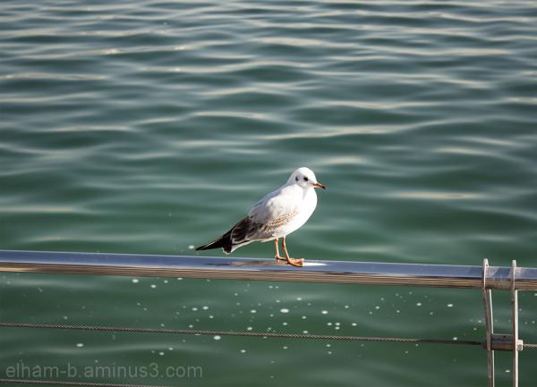 thinker Bird