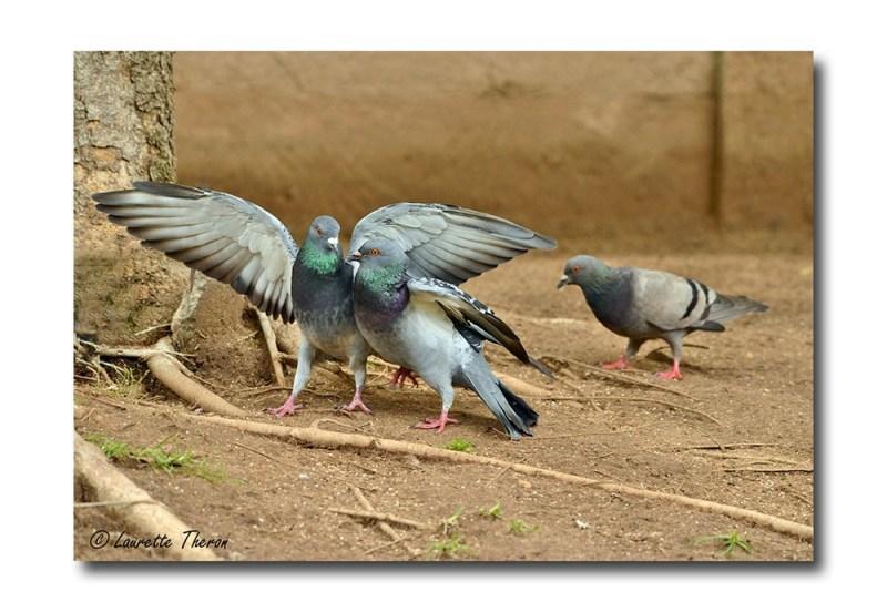 Bird Interaction