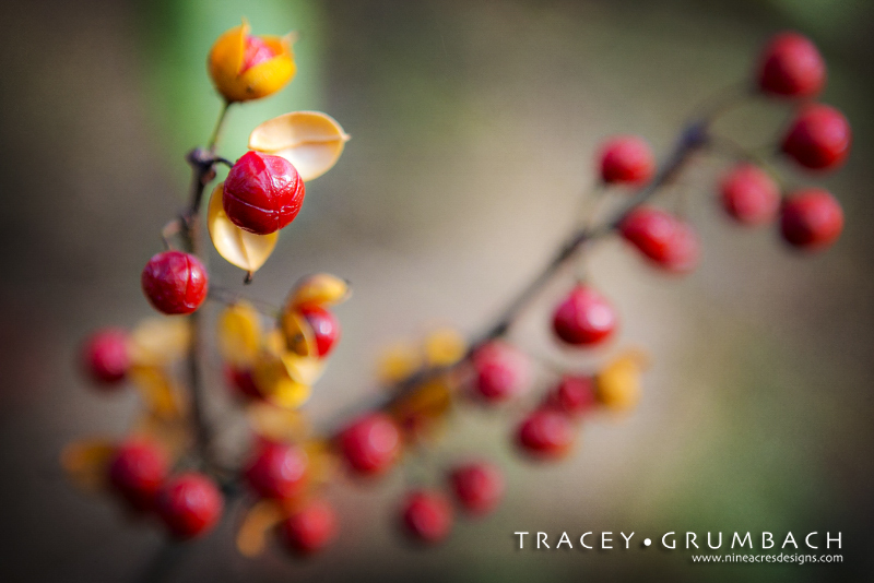 orange and red berries in autumn