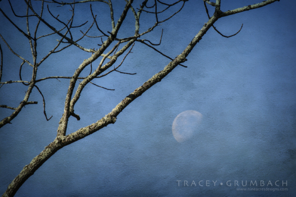 autumn branches with moon beyond