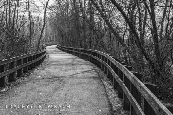 walking path through trees