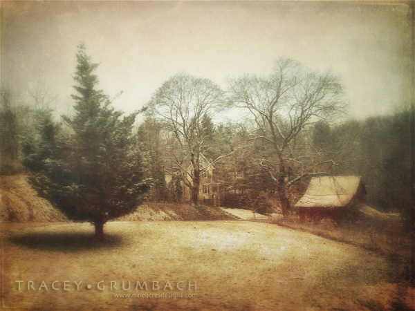 lone pine tree on a rural farm
