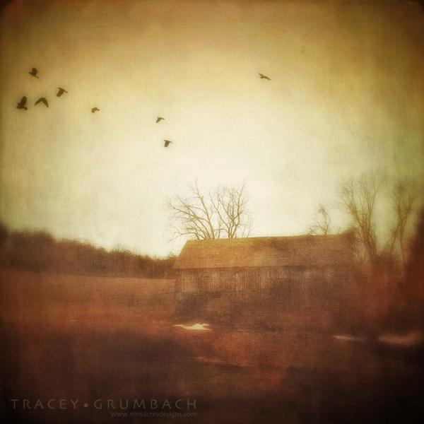birds take flight over a rural barn landscape