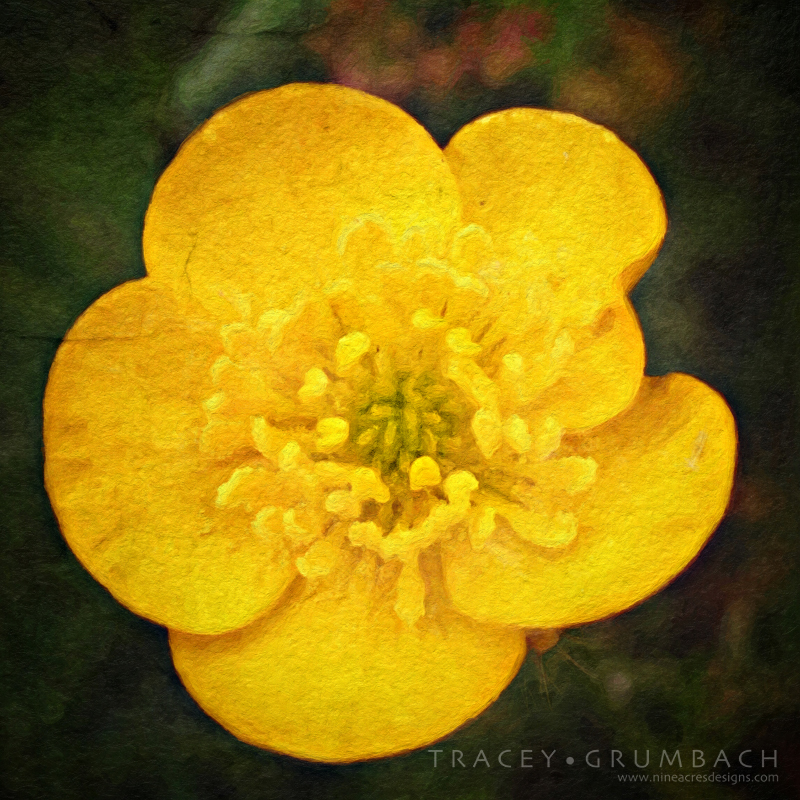 digital art showing spring buttercup