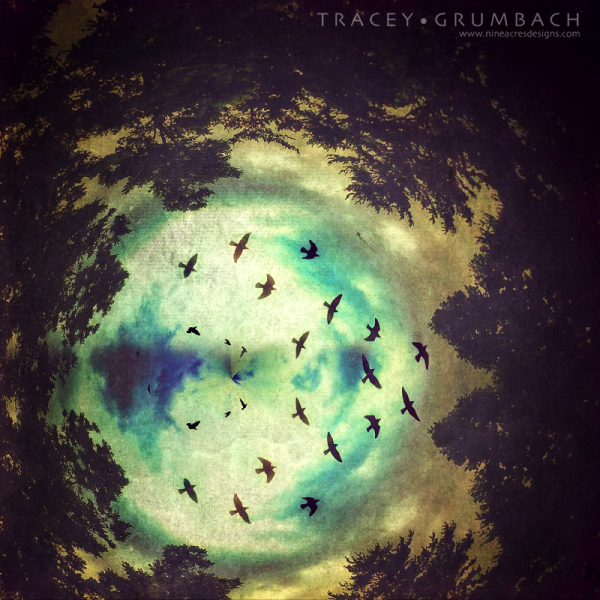birds flying into a black hole