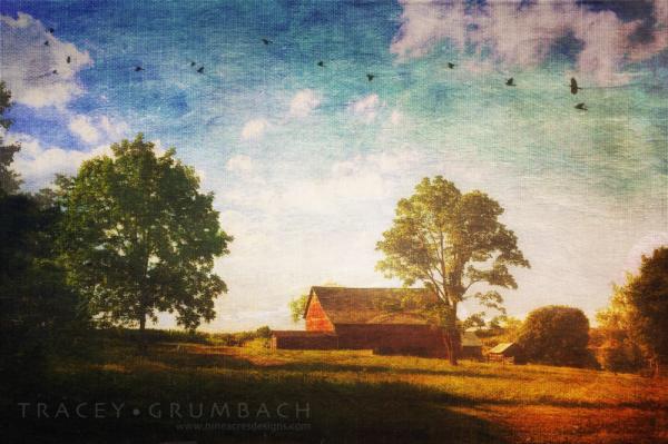 barn in the summer sun