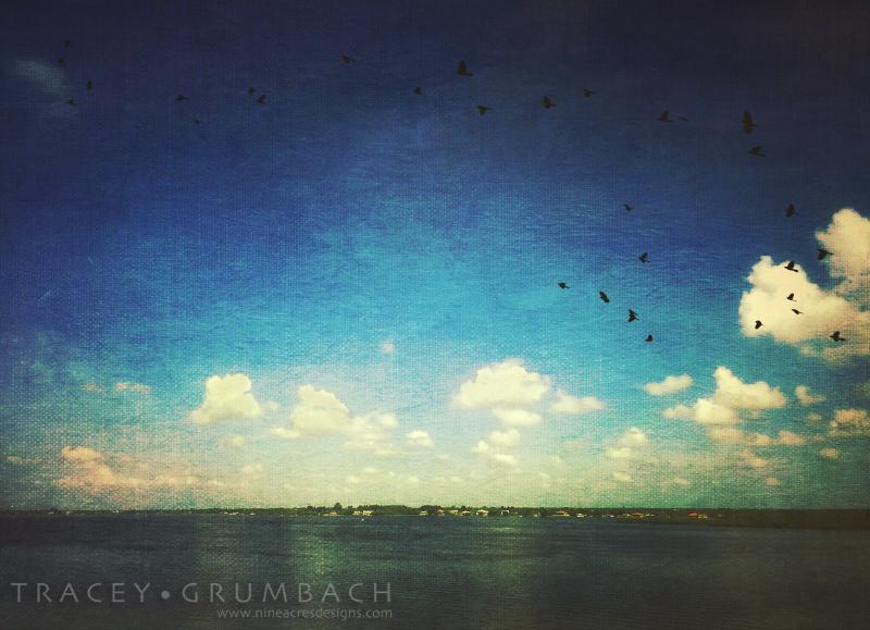 birds flying over water in Florida