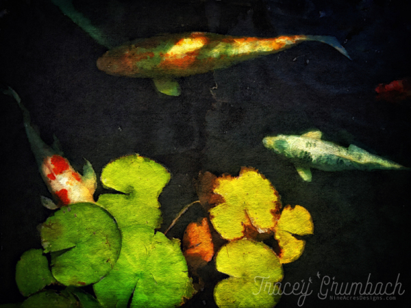 koi fish in a pond with water lillies
