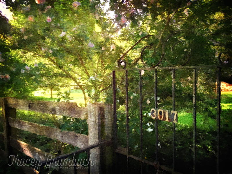 gate in a summer garden