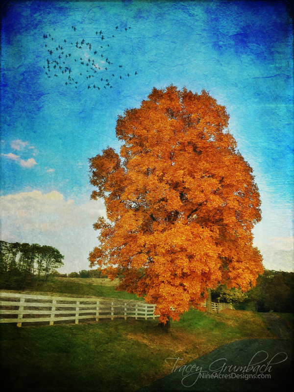 bright orange autumn tree