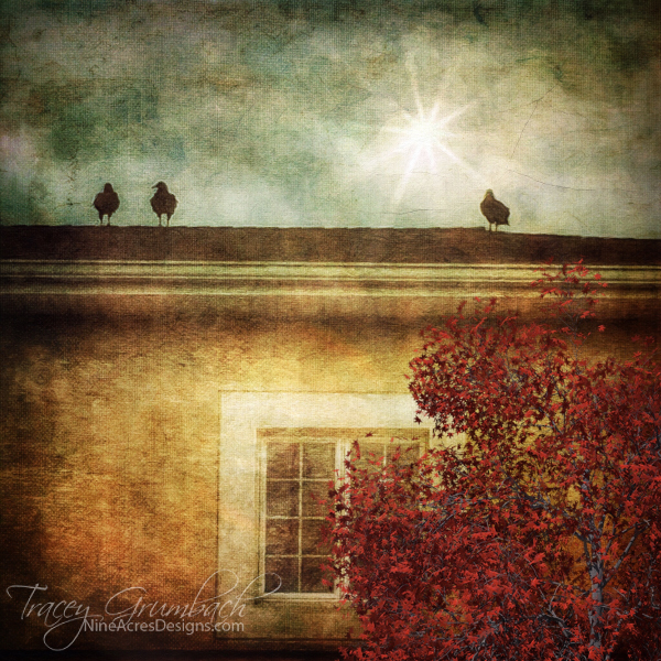 set of three birds sitting on a roof in autumn