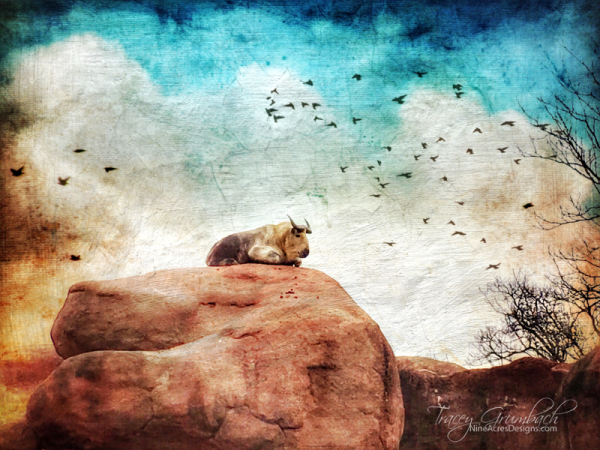 animal sitting alone on a rock