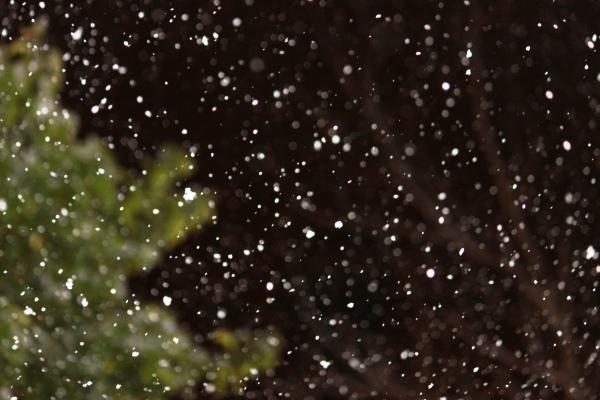 The Snow Night