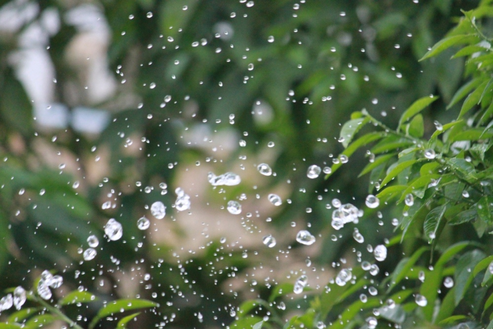 The Drops for Leaves