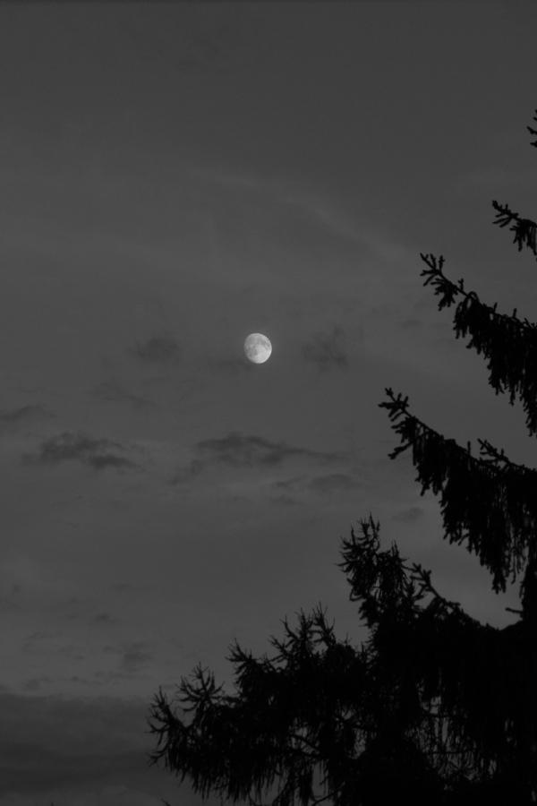 Moonlight Night!
