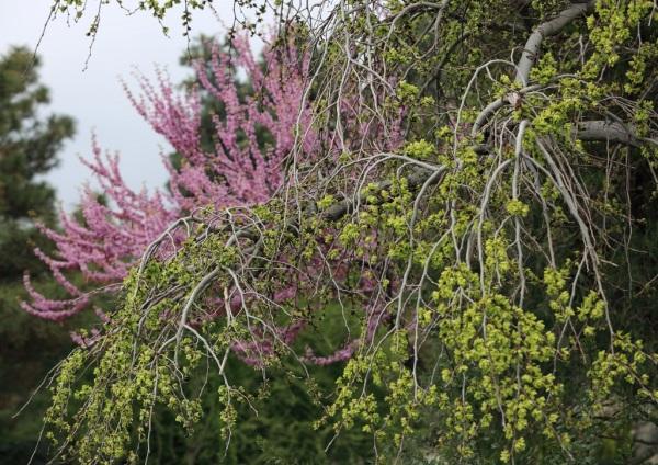 Beautiful Spring (2)