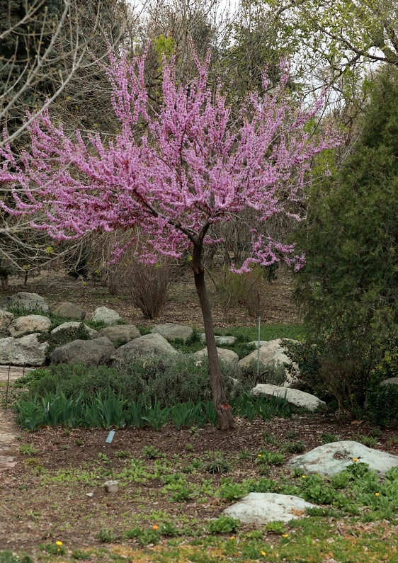 A Pink Spring!
