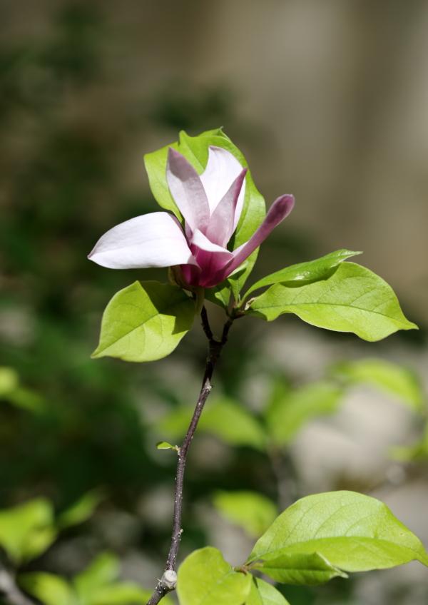 The Spring flower