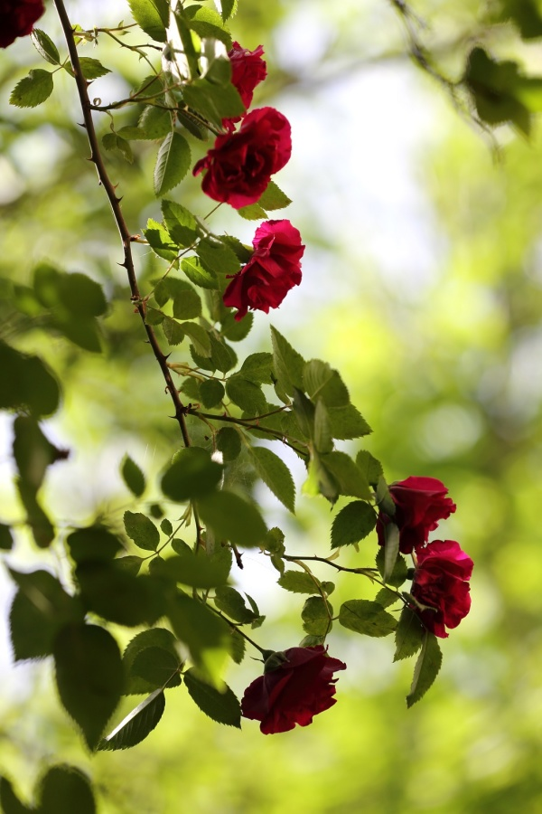 The Branches of Red Flowers