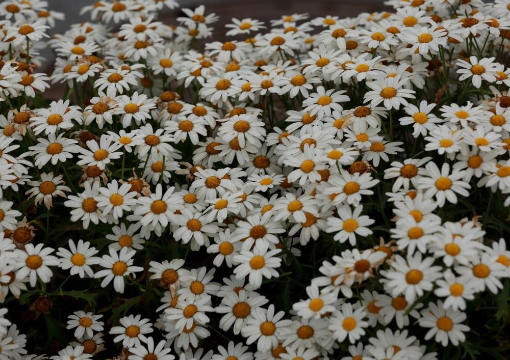Full of Flowers