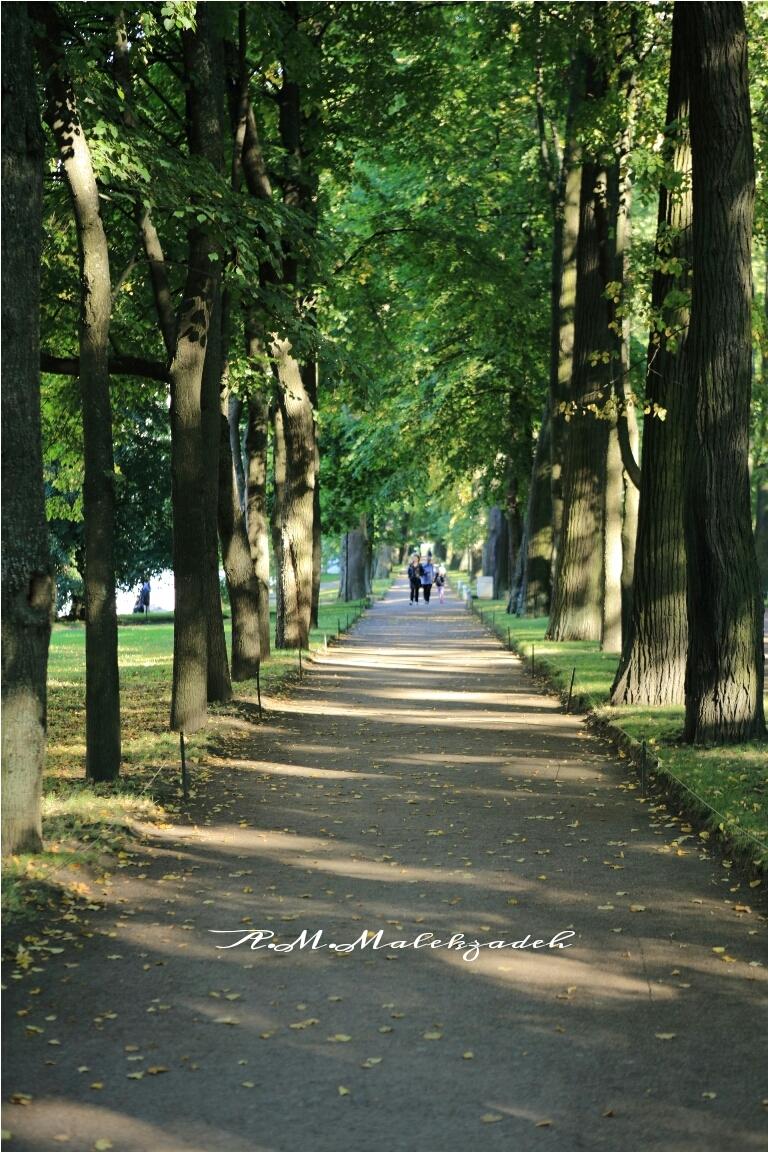 Walking in Autumn !