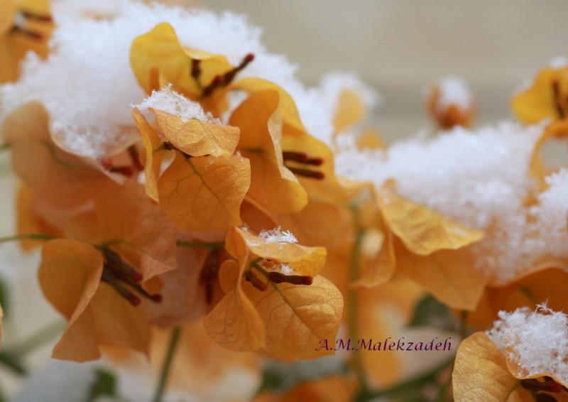 Orange & White !!