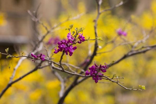 Again : Spring (1)