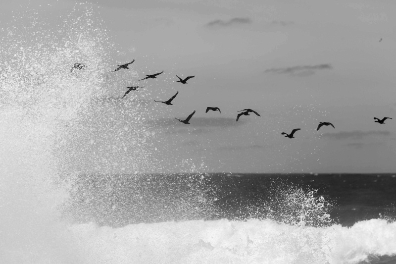Fly over the waves