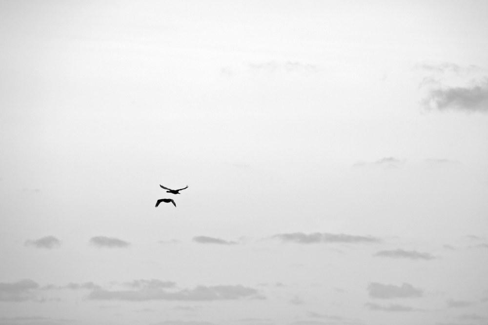 Flight...!