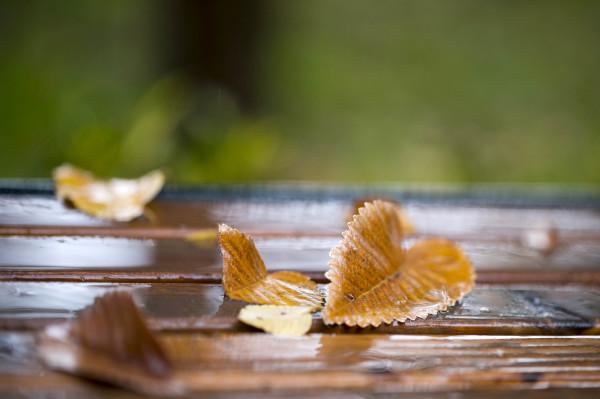 The Heart of Autumn