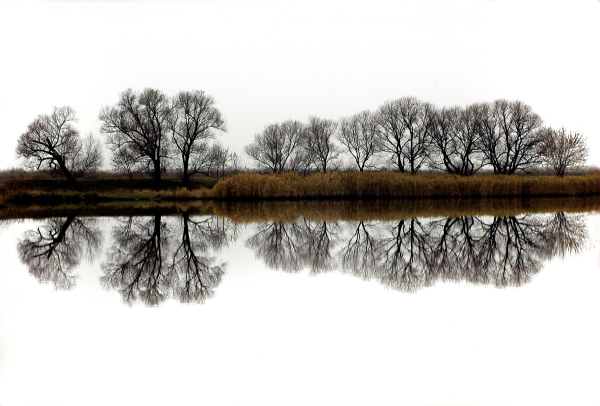 Trees reflected in the Southern Buh River