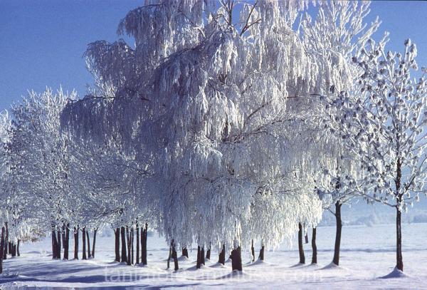 WINTER LANDSCAPE, UKRAINE