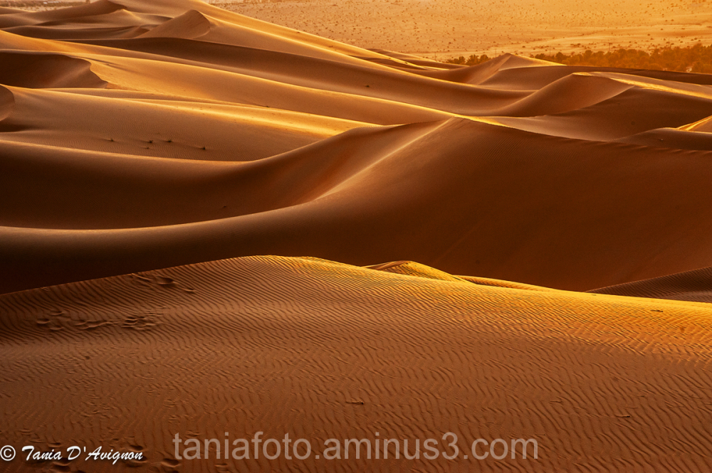LIWA, DESERT DUNES AT SUNSET