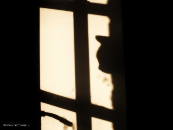 Un Chat à la porte !