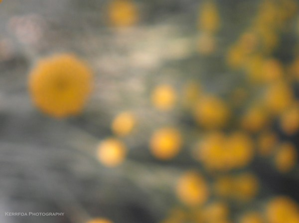 Des boutons jaunes
