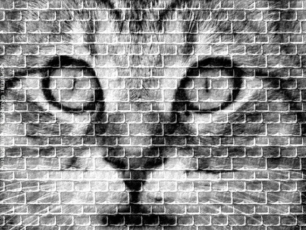Le Chat sur un mur