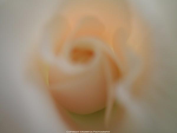 Intérieur rose blanche