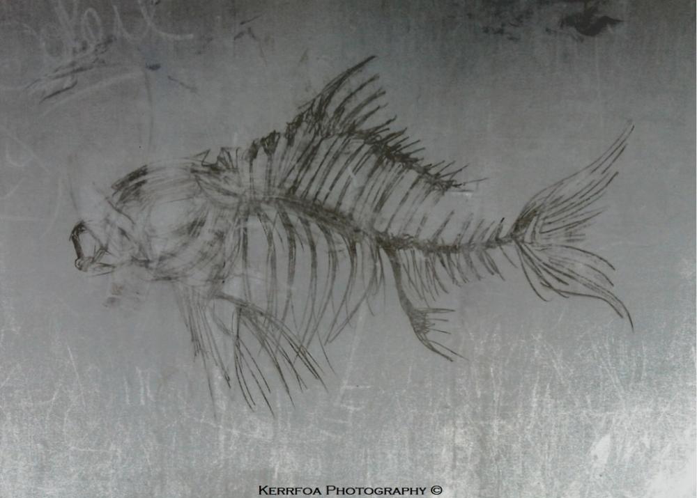 Le mur artistique le fossile