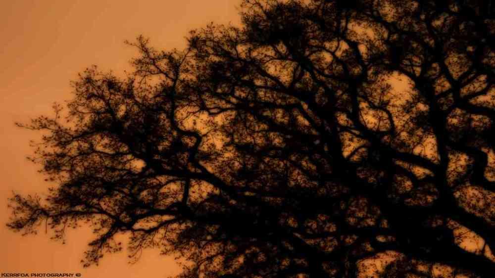De branches en branches