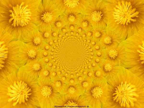 Kaleido Flowers 2