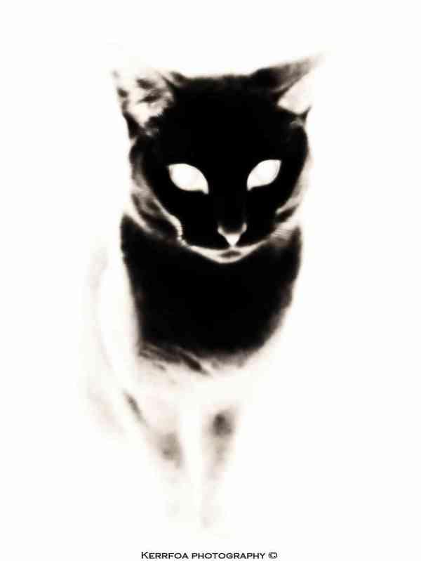 Le chat sur toile