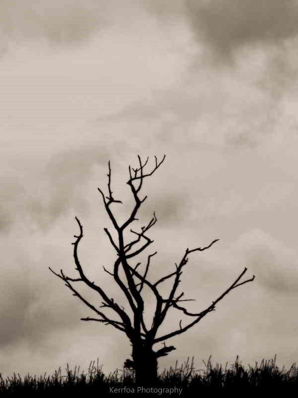 L'arbre nu