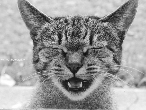 Voici le S O S d'un chat en détresse !!!