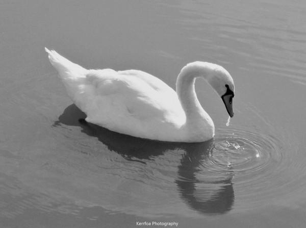 L'eau est son miroir