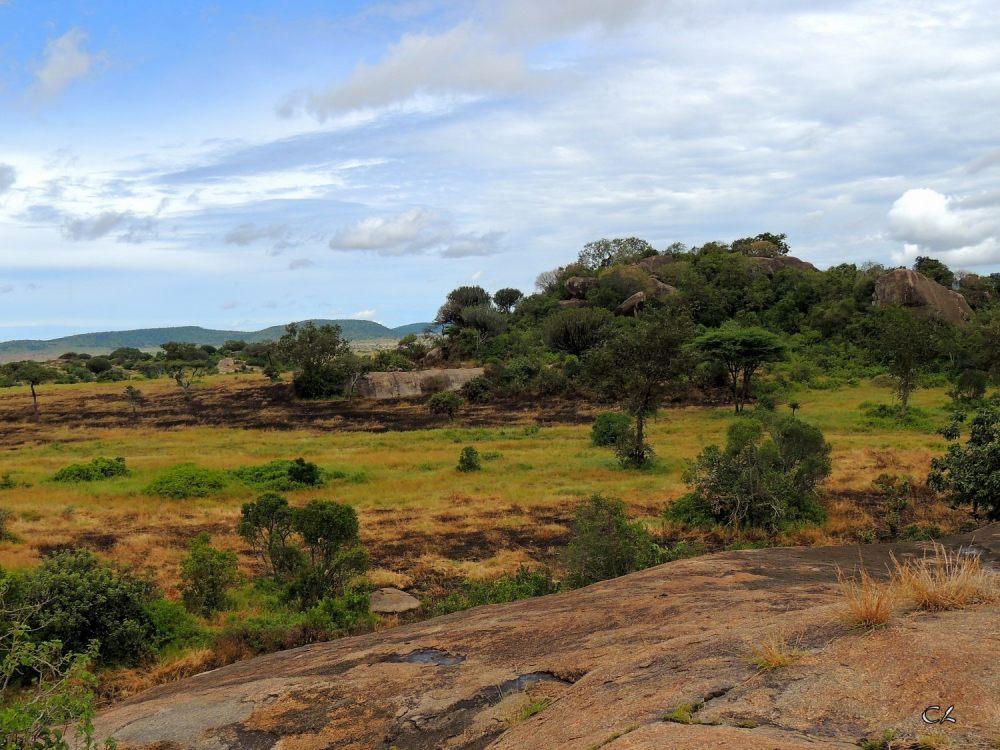 paysage typique d'Afrique