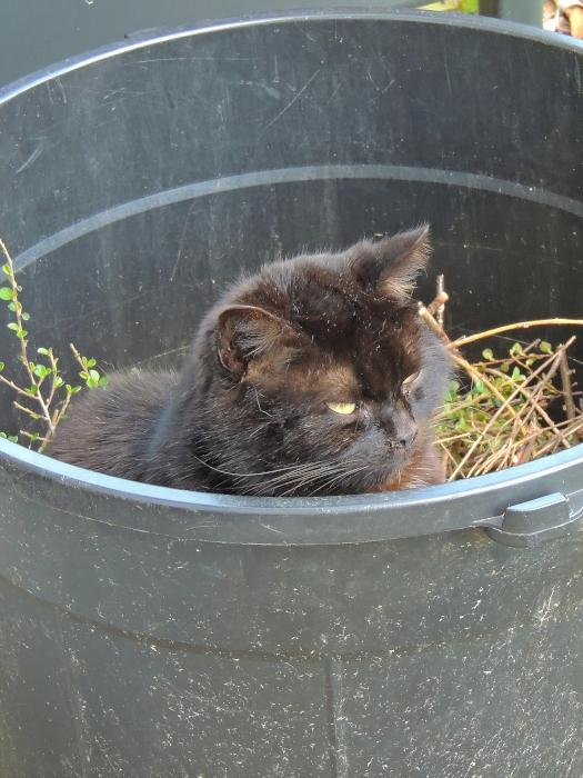 La poubelle de Charlot