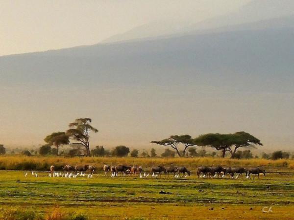 Au pied du Kilimanjaro