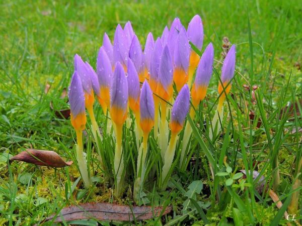 Prémices du printemps