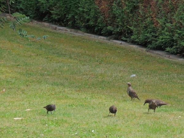 Hôtes de mon jardin cet été