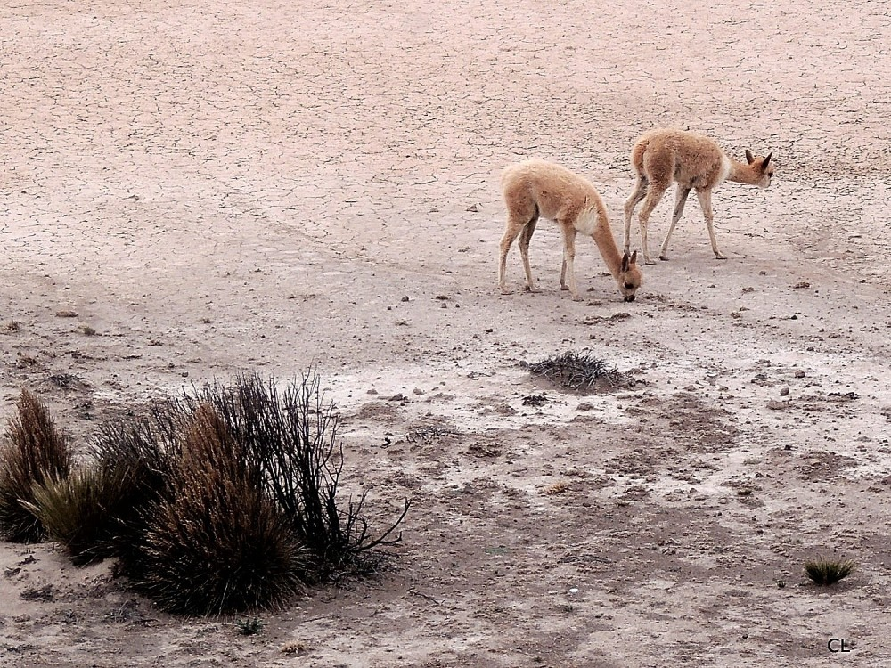 Reserve Nationale Salinas y Aguada Blanca
